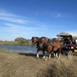 Carriages rides - La p'tite ferme de Mélie
