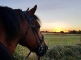 Horses - K-Unique Batz Equestre