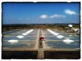 Brouette et sel des marais à Batz-sur-Mer