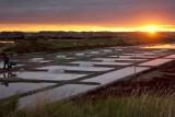 Guérande, Terre de Sel, coucher de soleil sur les marais salants