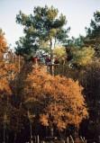 Monkey Forest - quoi de bien qu'une balade dans la cime des arbres !