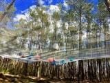 Monkey Forest - Venez sauter dans le gradn filet de 1000m²