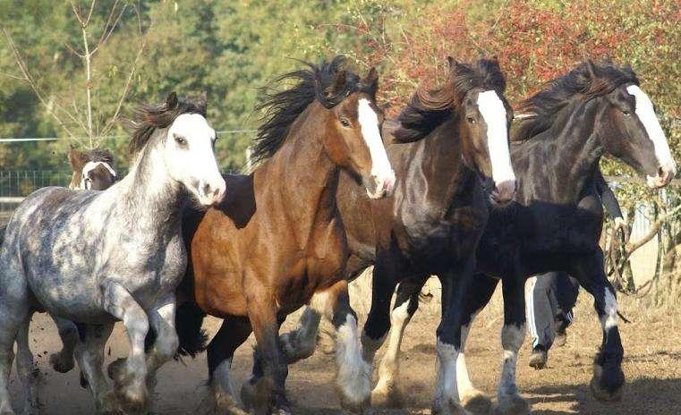 Centre équestre Horselou à Guenrouët