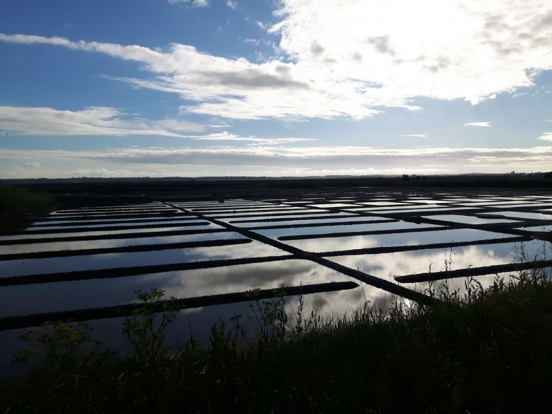 Salt marshes - Batz-sur-Mer