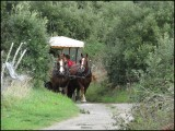 ​Horse carriage ride