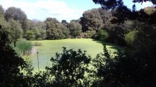 Coupure verte - Batz-sur-Mer